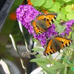 Glück ist wie ein Schmetterling, es kommt zu dir und fliegt davon...