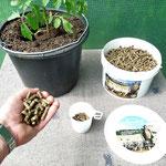 ca. 50 Gramm pro Pflanze in das Pflanzloch geben