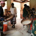 Gewaschener und getrockneter Mais wird von Verunreinigungen getrennt