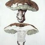 Champignons - LUSSIGNY