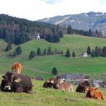 Blick von Todtnauberg zum Herzogenhorn