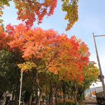 Peace Boulevard (Heiwa Odori) in Autumn