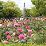Rose garden in peace memorial park