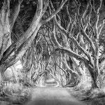 Bregagh Road