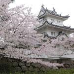 津城跡と桜