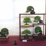 47 Composizione shohin - Studio Botanico