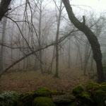 Vistas del bosque