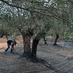 Letzte Überprüfung, ob die ersten Bäume gut umspannt sind ... dann kann es losgehen.