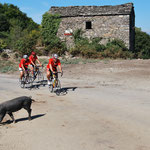 Cochons, vaches, veaux, chèvres, chiens jalonnent notre route