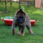 10 Wochen alt