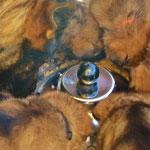 Nox mit den Kleinen gemeinsam am Fressen