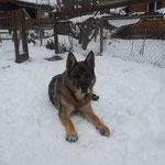 Dezember 2013, 13 3/4 Jahre alt, 1 Woche vor seinem Tod