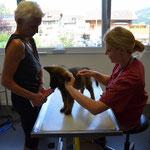 Tierarztbesuch. Impfen und Chipen