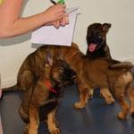 Tierarztbesuch