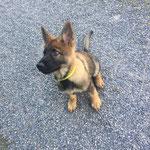 11 Wochen alt, Kayo