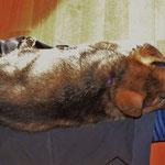 Schlaf auf den Beinen