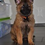 8,5 Wochen alt