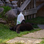 Jamiro kann sich sehr gut alleine beschäftigen :)