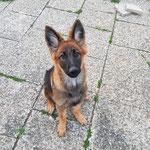 5,5 Monate alt