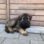 fast 8 Wochen alt