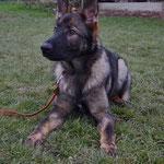 7 Monate alt, Kalou