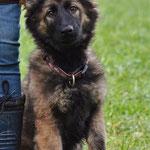 3,5 Monate alt, Riva