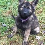 3 Monate alt, Riva