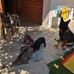 Fütterung und Gringa und Nox müssen zuerst zuschauen. 4,5 Wochen alt