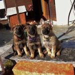 Gringa, Gasira und Gina