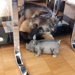 11 Wochen alt