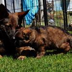 Gringa spielt mit ihren Kleine