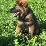 3 Monate alt