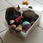 9 Wochen alt im neuen Zuhause