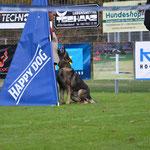 Schweizer Meisterschaft 2017  IPO3 Schutzdienst