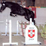 Swiss Breed Classic 2007, 7. Rang