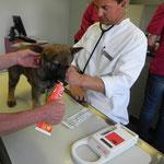 Tierarztbesuch, Impfen und Chipen