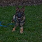 7 Monate alt, Kayo