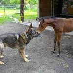 Küsschen von Zoro. Er liebte die Fohlen