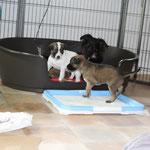 Aragon, Alaia und Bonnie