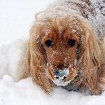 Schnee ist lecker