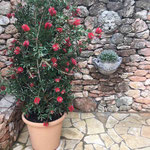Ibiza: Wasserspeier BACCHUS wässert das Wandpflanzgefäß FAUNUS