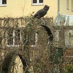 Potsdam: Bronzefigur Eule NOCTUS auf einem Steintor