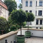 Magdeburg: Orangeriekübel SANS,SOUCI