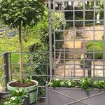 Magdeburg: Orangeriekübel SANS, SOUCI auf Terrasse, mit Blick in den Garten.