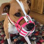 """Maulkorb """"Nase frei"""" mit FressSchutz (oben, mitte, unten) und Stirnriemen in den Farben Weiß und Neon-Pink"""