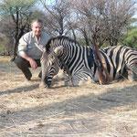 Bergzebra, Mountain Zebra Hartmann´s Zebra