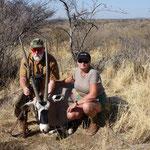 Gemsbock ( Spießbock) Oryx Antilope