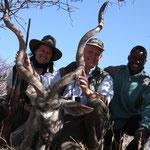 Großer Kudu / Greater Kudu