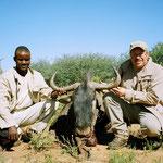 Streifengnu, Blue Wildebeest, Blue Gnu, Brindeled Gn