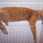 23.12.2004 - Hier ist es schön warm, hier bleibe ich liegen ...